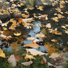 Protecting Your Pond and Fish During Autumn and Winter